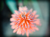 flowering Aloe