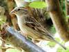 2020MAY07_Sparrow (4.45MB)