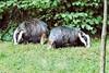 Badgers back to back.