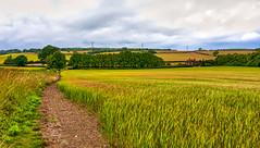 Photo of Bentley Crop Fields 2