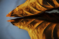 Photo of Reflected brown leaf