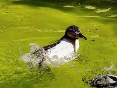 Photo of Splish, splash