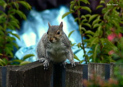 Photo of The Visitor