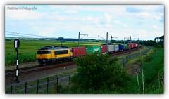 Bentheimer Eisenbahn E01/1835   Lelystad-Oostvaarders (NL)