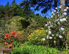 Photo of Arduaine Gardens, Argyll & Bute