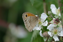 Photo of Butterfly Feasting on Blossom