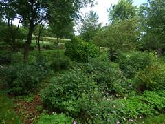 Photo of Return to Castle Bromwich Hall Gardens - Upper Wilderness