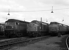 Photo of Brush Type 4 D1744, EE Type 4 233 and 'Hoover' D449 20-07-69