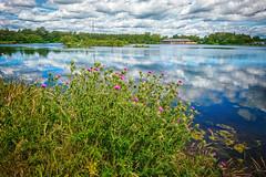 Photo of Drumpellier Loch