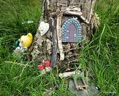 Photo of fairy tree Dumbarton Scotland