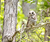 """owl_07 • <a style=""""font-size:0.8em;"""" href=""""http://www.flickr.com/photos/47141623@N05/50106786032/"""" target=""""_blank"""">View on Flickr</a>"""