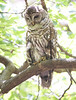 """owl_01 • <a style=""""font-size:0.8em;"""" href=""""http://www.flickr.com/photos/47141623@N05/50106786732/"""" target=""""_blank"""">View on Flickr</a>"""