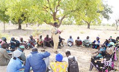 CRS staff in Mali sensitising farmers on the benefits of FMNR to encourage natural regeneration. Photo Aminata Fofana