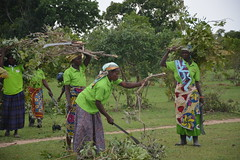 women collecting firewood from fmnr field