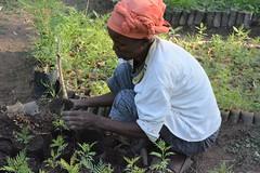 A member of Bishola Women Group in Ethiopia potting tree seedlings for the nursery