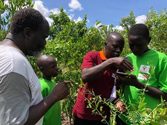 Robert Oroiyo taking Mr and young farmers through the Regreening Africa App. Photo Regreening Africa