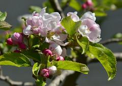 Anglų lietuvių žodynas. Žodis self-pollination reiškia n bot. savidulka lietuviškai.