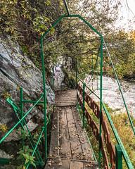 Sad-Pionov-Chemal-Altai-0183