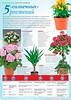Домашние цветы № 4 апрель 2020