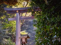 Torii Gate at Meiji Jingu Shrine, Tokyo