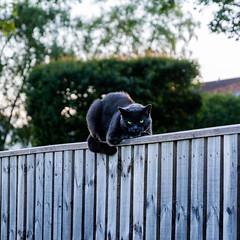Photo of Slightly demonic cat