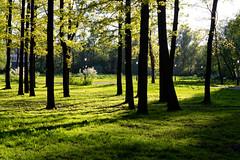 Saint Petersburg: Metropolitan garden