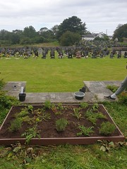 Photo of Local Places for Nature Llanfaelog Cemetary Anglesey