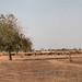 Sine-Ngayene stone circles panorama