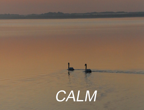 Martin King - CALM-THOUGHTS1