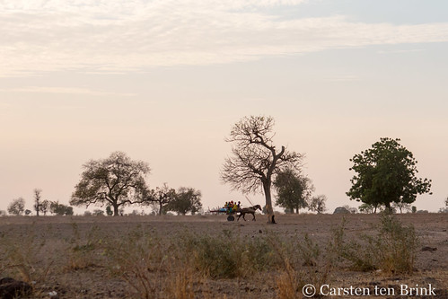 Horse cart / charette at sunset near the megalith quarry