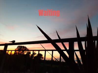Carol Maxwell - SWALLOW WAITING-Swallow Waiting
