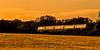 Golden Hour Train