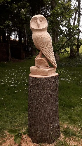 CONLETH GENT WISE OWL. CEDAR   Not for salePHOTO-2020-06-25-13-06-49