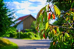 Autumn leaves bokeh | July 21, 2020 | In the district of Segeberg - Schleswig-Holstein - Germany | Fujifilm X-T100