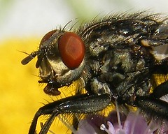 Photo of Fly's Eye. Close Up. Fuji S8000fd. DSCF8462