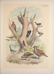 Anglų lietuvių žodynas. Žodis chamaea fasciata reiškia <li>Chamaea fasciata</li> lietuviškai.