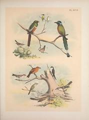 Anglų lietuvių žodynas. Žodis carpodacus mexicanus reiškia <li>carpodacus mexicanus</li> lietuviškai.