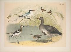Anglų lietuvių žodynas. Žodis short-billed marsh wren reiškia trumpas-mokami marsh wren lietuviškai.