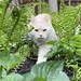 Adult Flora & Fauna 2020 Photo Contest Entries