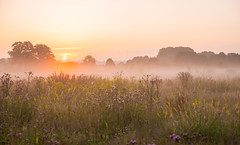 Sunrise in Ingendael