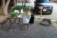 Campsite at the West Yellowstone KOA with Mr. Luke