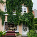 Beautiful authentic German building covered in green plants in Bremen, Germany