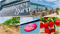 Photo of The Strawberry Barn