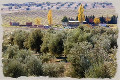 Valdemoro, paisaje con olivos