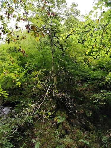 Walk down Glen Ness
