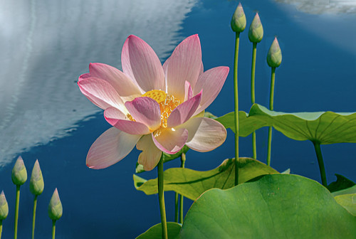 Lotus Lessons