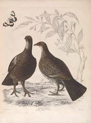Anglų lietuvių žodynas. Žodis cinnamomum camphora reiškia <li>cinnamomum camphora</li> lietuviškai.