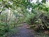Rosebank Community Woodland, Dunipace