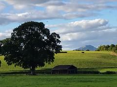 Photo of Old Oak