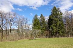 Bois des Glaisins @ Annecy-le-Vieux